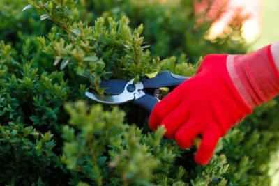 Suivez les conseils de Boissonnet paysagiste pour la taille de vos arbuste et massif