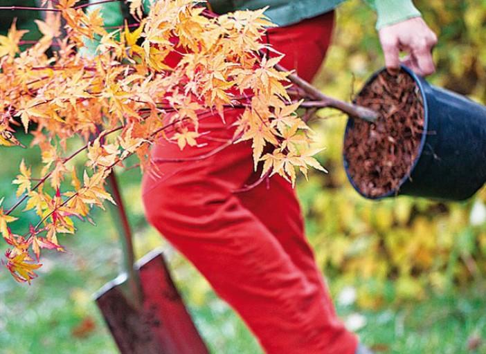 Boissonnet paysagiste vous conseil sur les plantations d'arbustes dans les Vosges