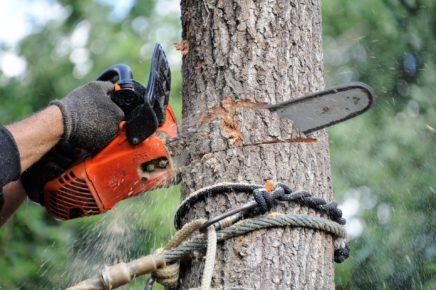 Arboriculteur Boissonnet élague vos arbres